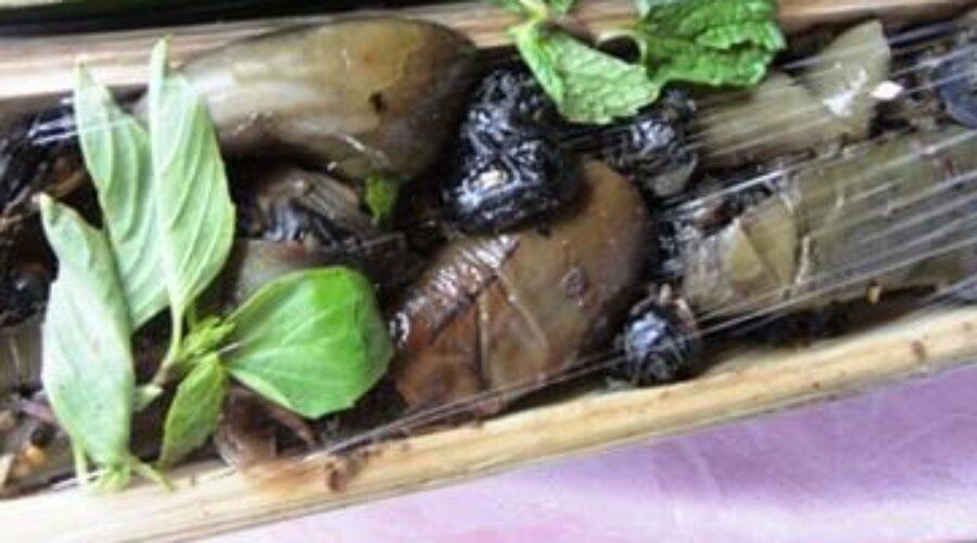 Cà đắng – món ngon từ núi rừng Kon Tum