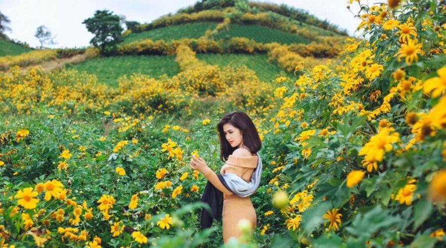 Theo dấu sắc hoa dã quỳ, mùa vàng Tây Nguyên