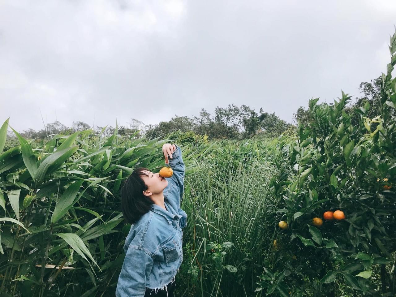 Vườn cam Măng Đen Orfarm