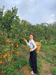 Mareeba Orchard Mang Den