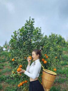 Mareeba Orchard Mang Den 13