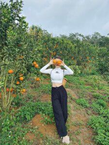 Mareeba Orchard Mang Den 14