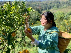 Mareeba Orchard Mang Den 17