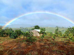 Mareeba Orchard Mang Den 25