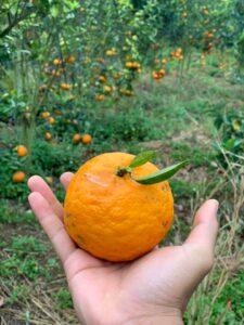 Mareeba Orchard Mang Den 7