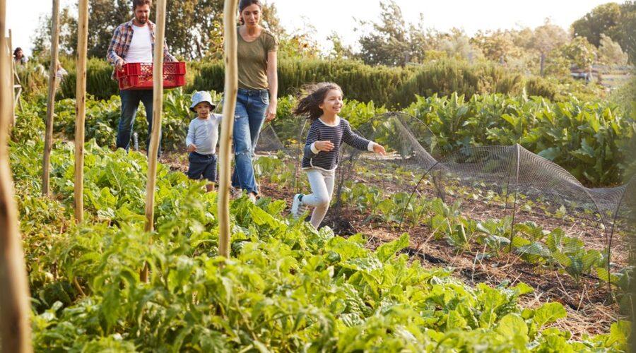 Lý do giúp farmstay trở thành nơi tuyệt vời để giáo dục trẻ