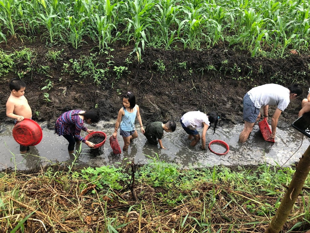 farmstay và giáo dục trẻ