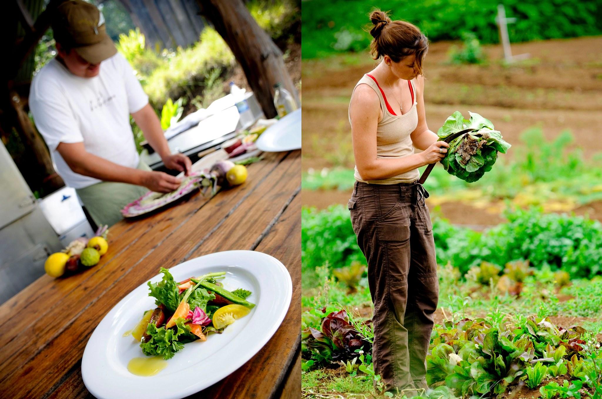 farmstay kết hợp thiền, yoga và thực dưỡng