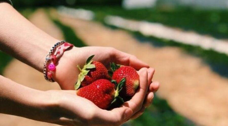 Farmstay có phải là du lịch nông nghiệp không?