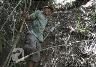 Bamboo tube is removed from the riverbank Caucasian Yam, near cave dwelling of 2 tiger mother 's house.