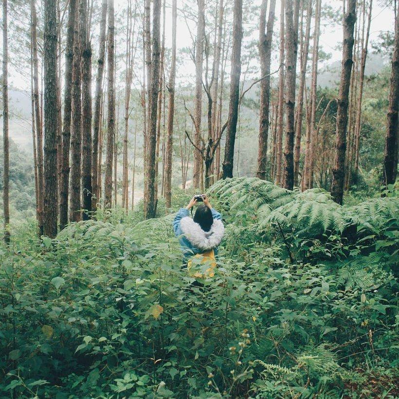 Toki - homestay rừng thông cực lãng mạn ở Măng Đen