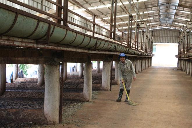 Trang trại dê sữa Măng Đen